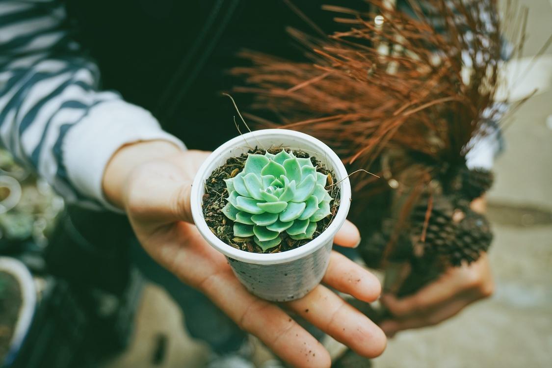 Plant,Cactus,Houseplant