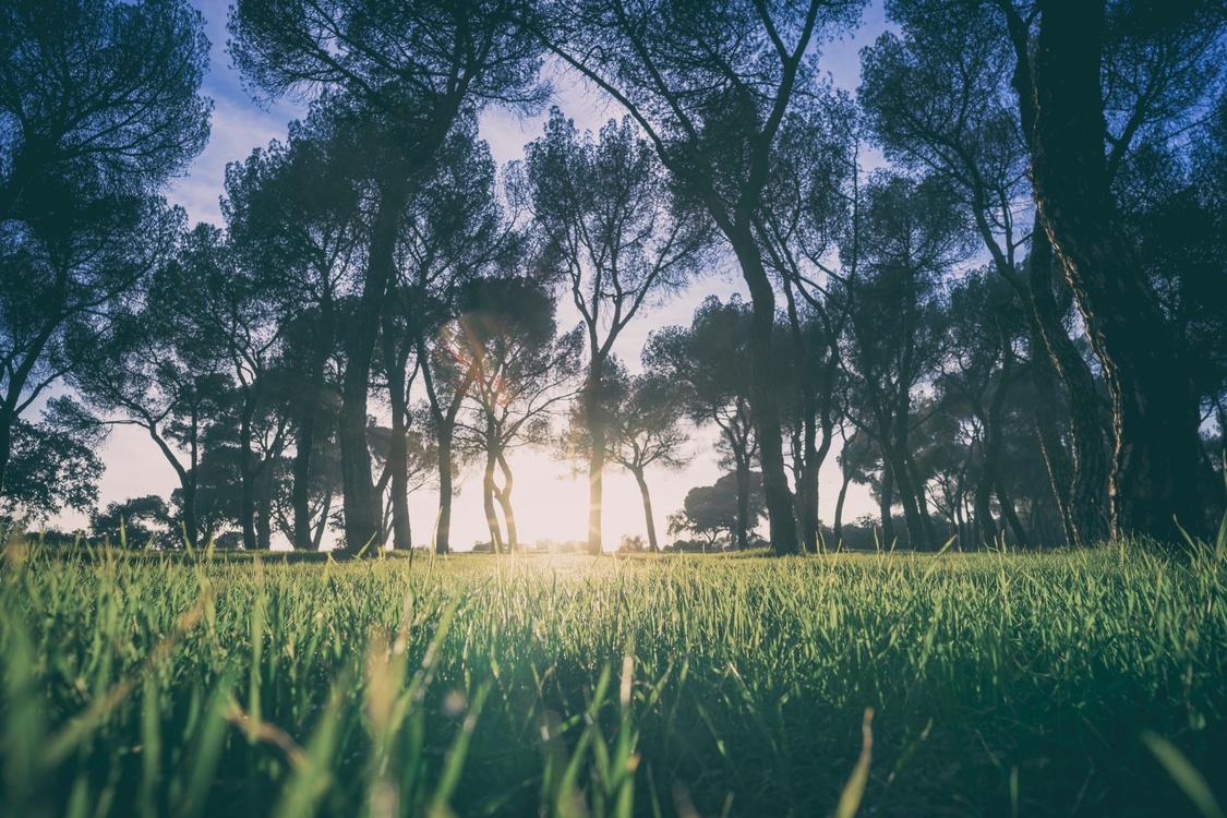 Atmosphere,Prairie,Meadow