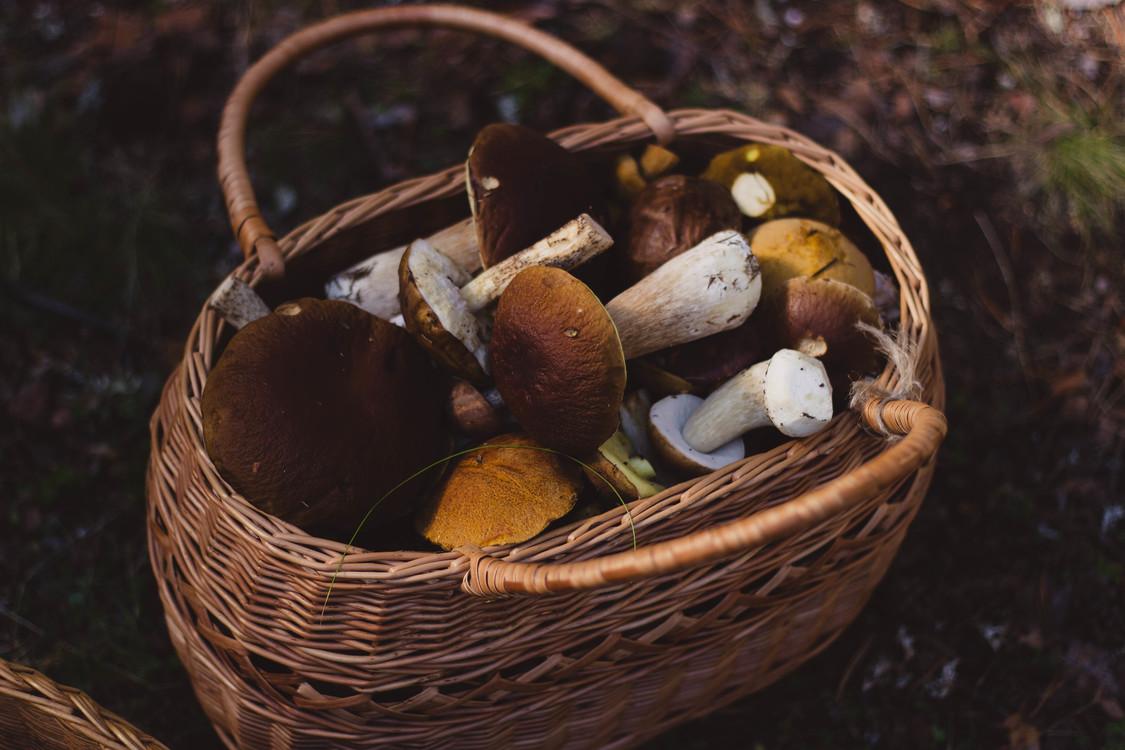 Mushroom,Edible Mushroom,Still Life Photography