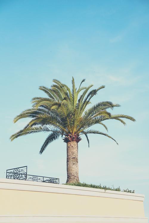 Plant,Tree,Arecales