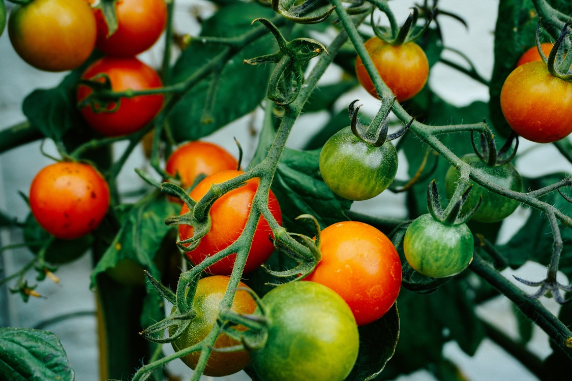 Tomato,Superfood,Orange