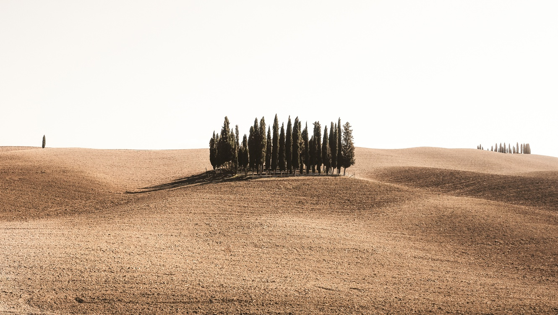 Grass Family,Aeolian Landform,Soil