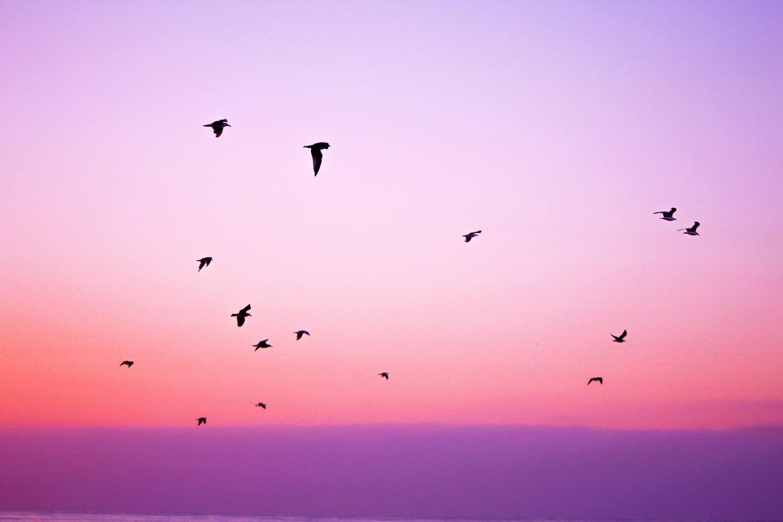 Atmosphere,Bird Migration,Dusk