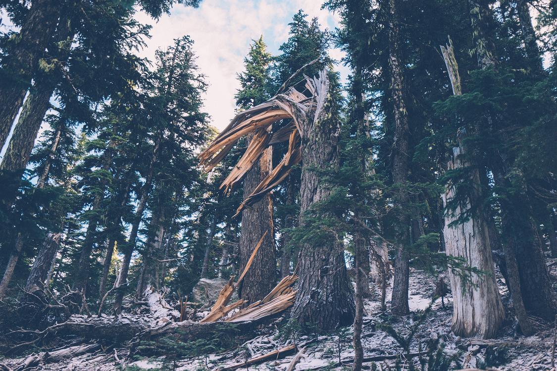 Biome,Plant,Wilderness