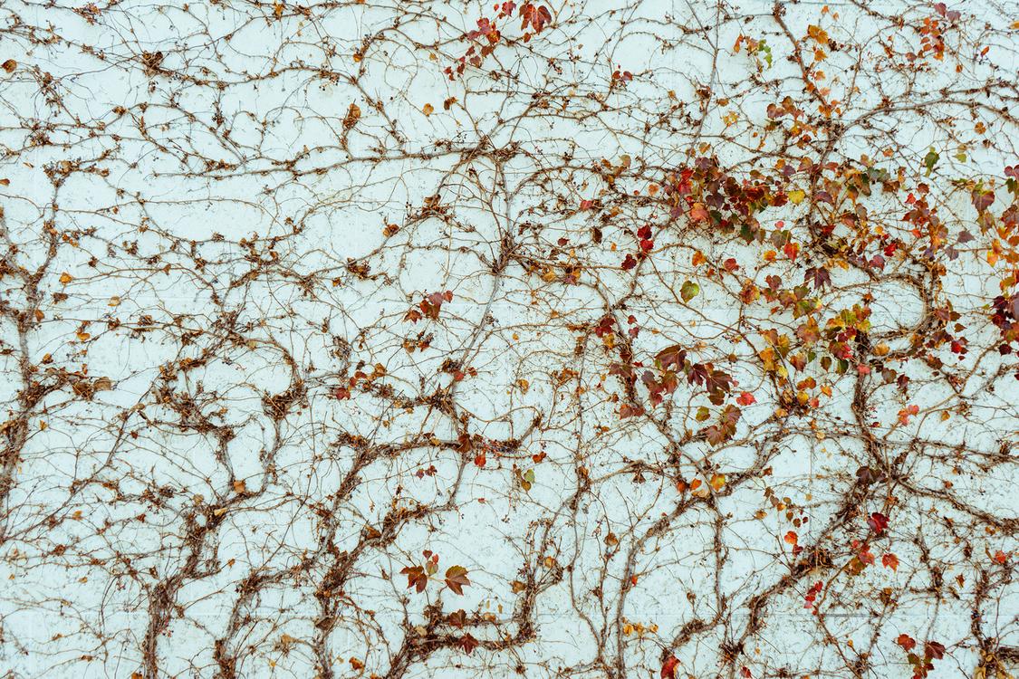 Twig,Tree,Texture