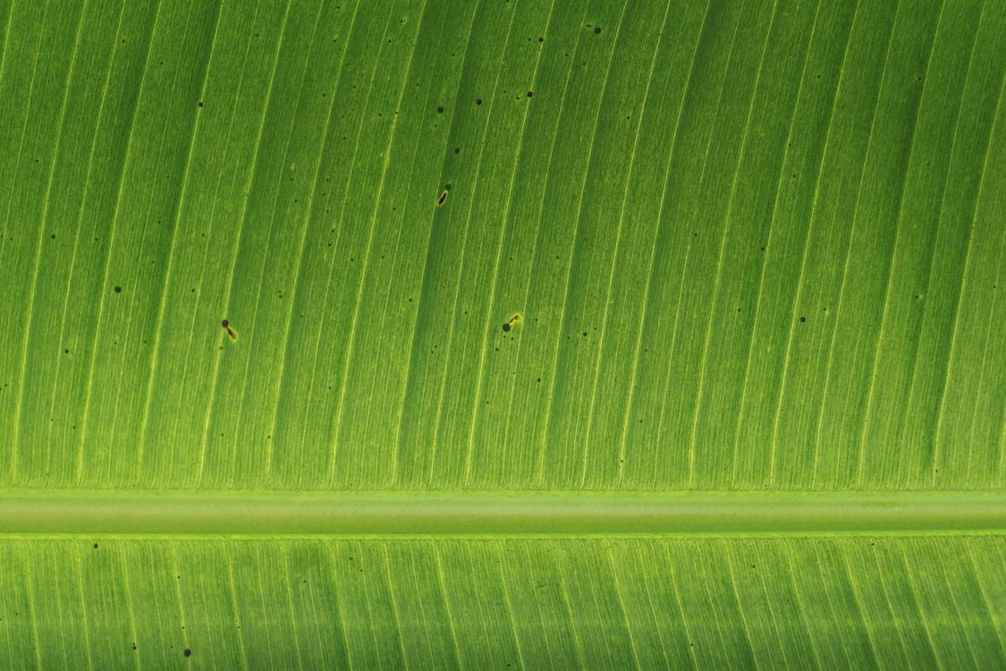 Computer Wallpaper,Lawn,Plant