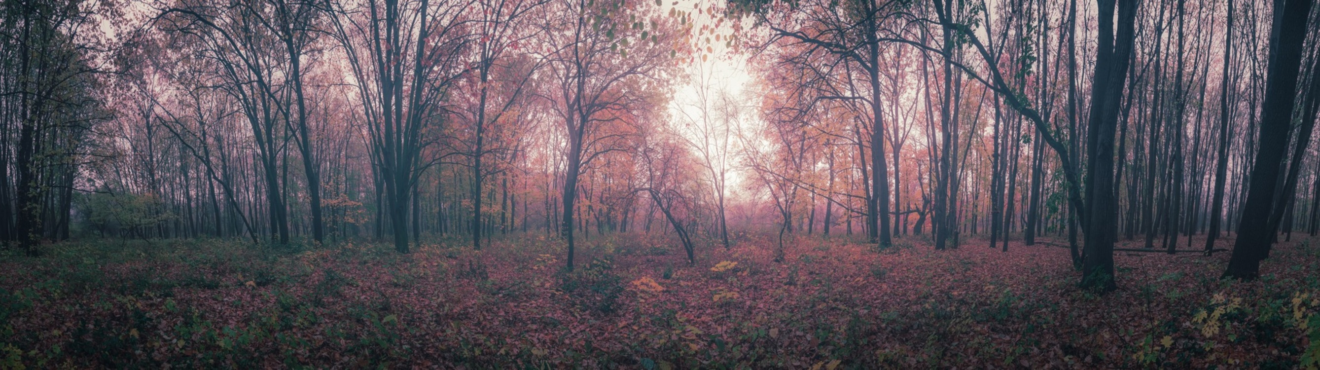 Atmosphere,Northern Hardwood Forest Concept,Temperate Broadleaf And Mixed Forest