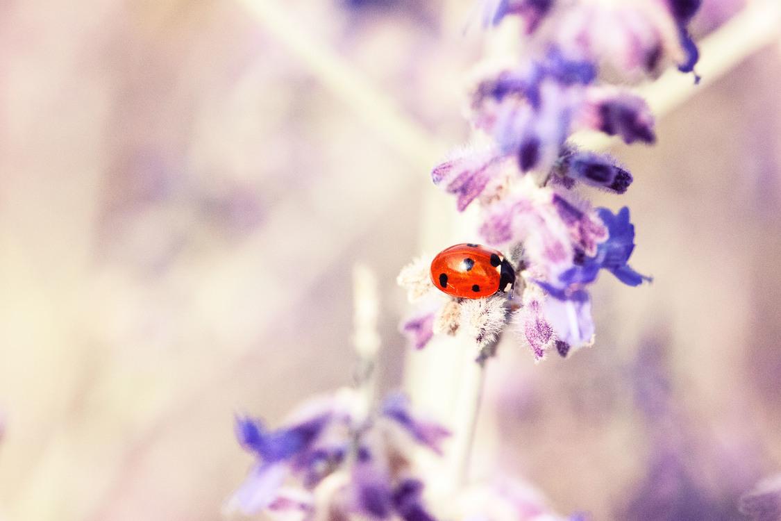 Petal,Pollinator,Plant