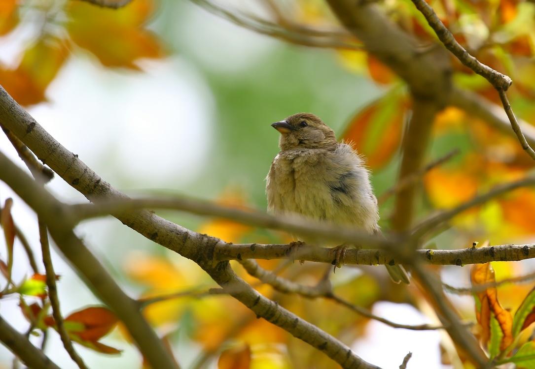 Perching Bird,Wildlife,Flora