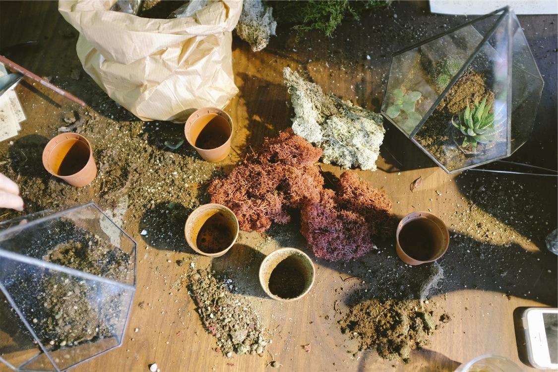 Spice,Garden,Gardening