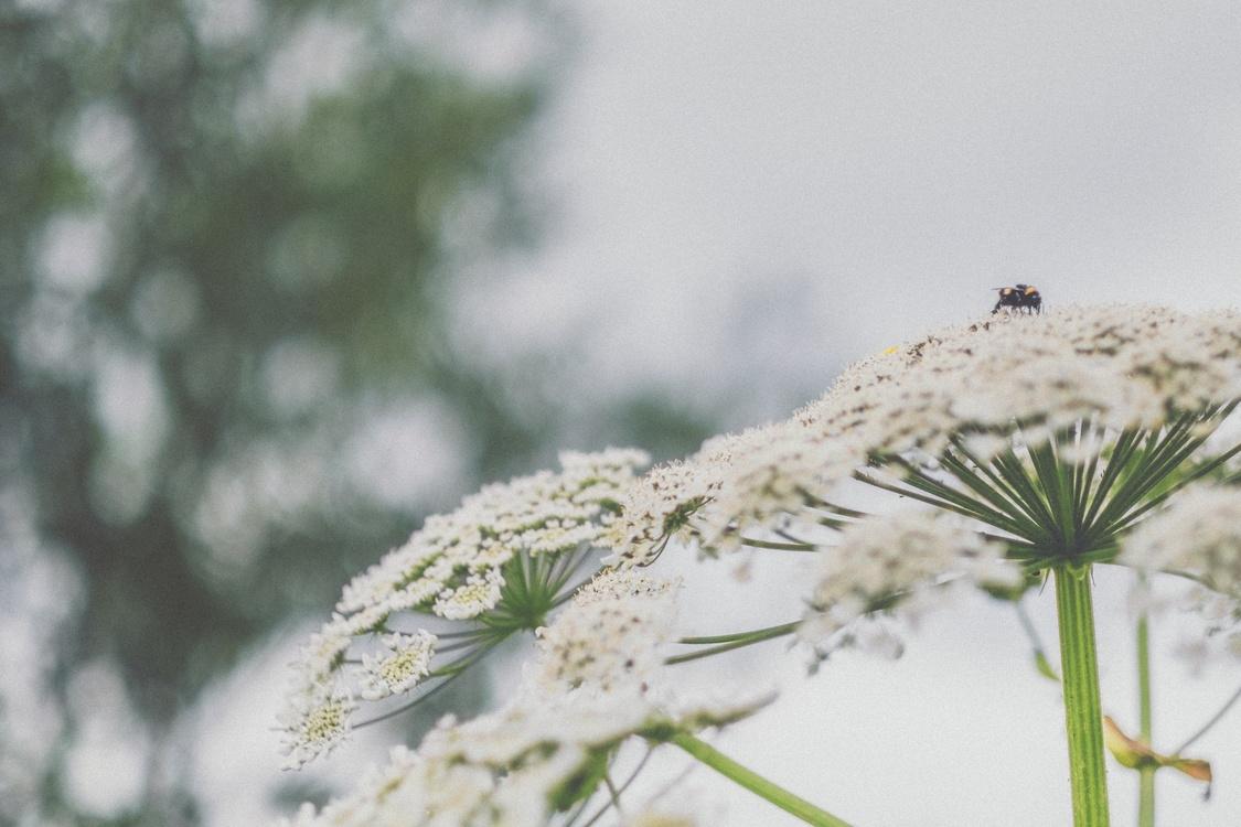 Grass Family,Flora,Winter