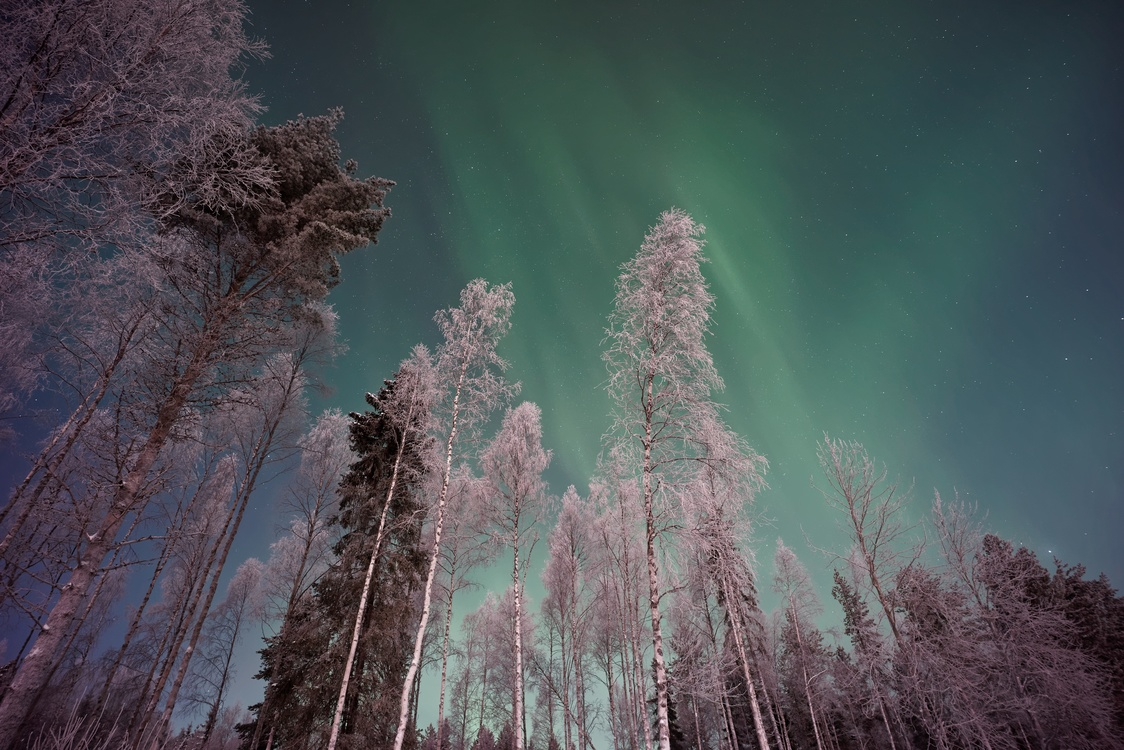 Atmosphere,Forest,Winter