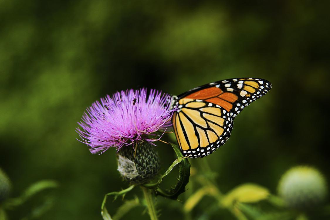 Butterfly,Flower,Nectar