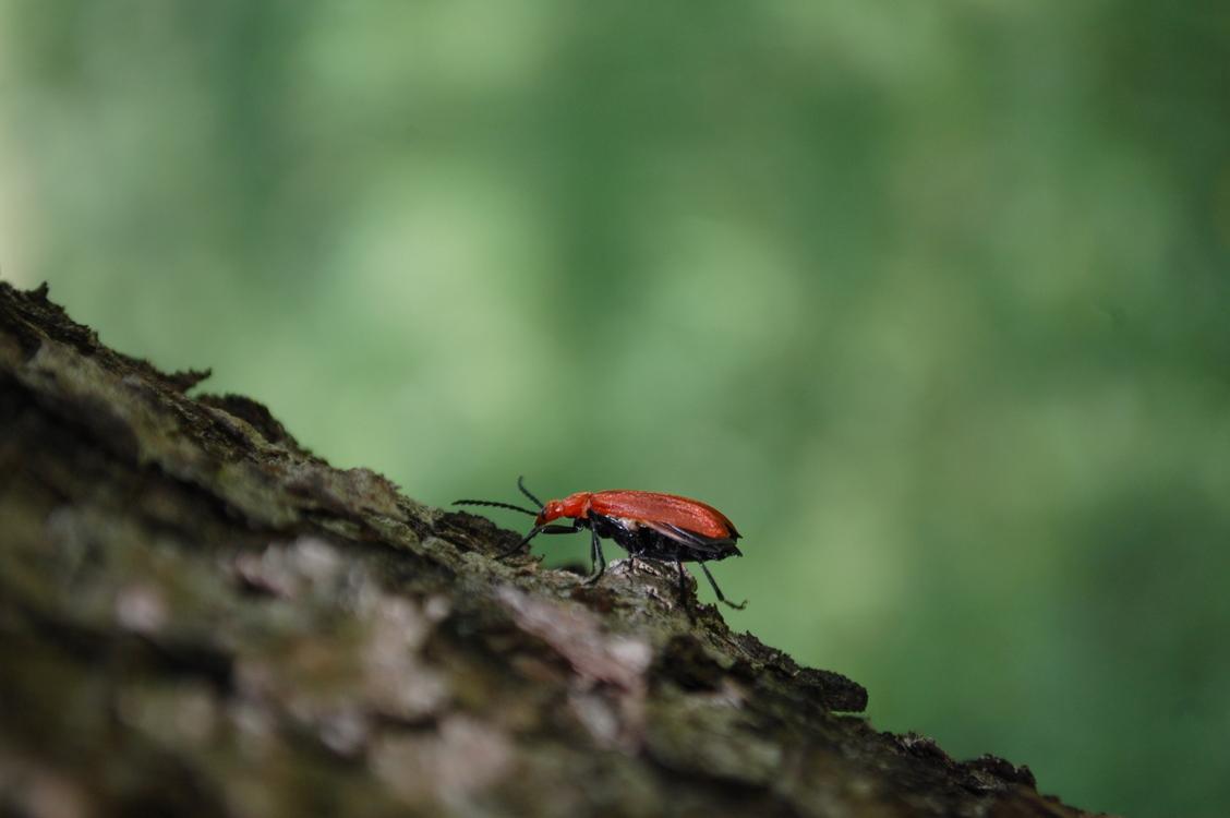Wildlife,Ecosystem,Macro Photography