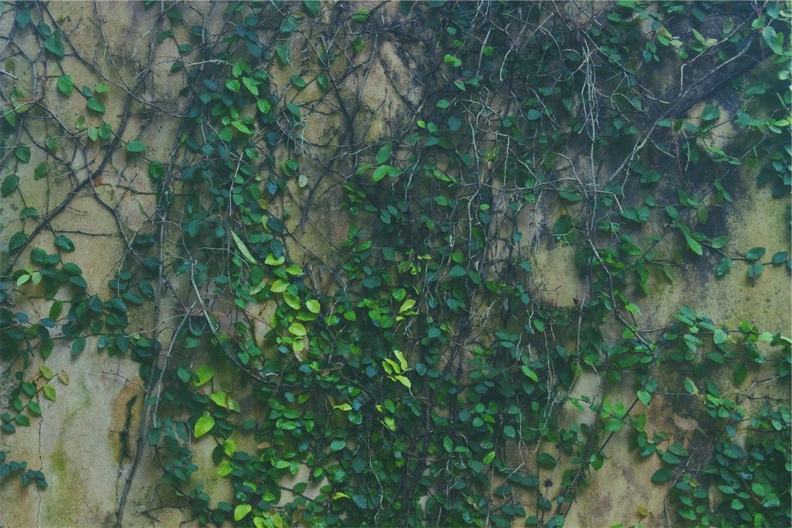 Biome,Plant,Leaf