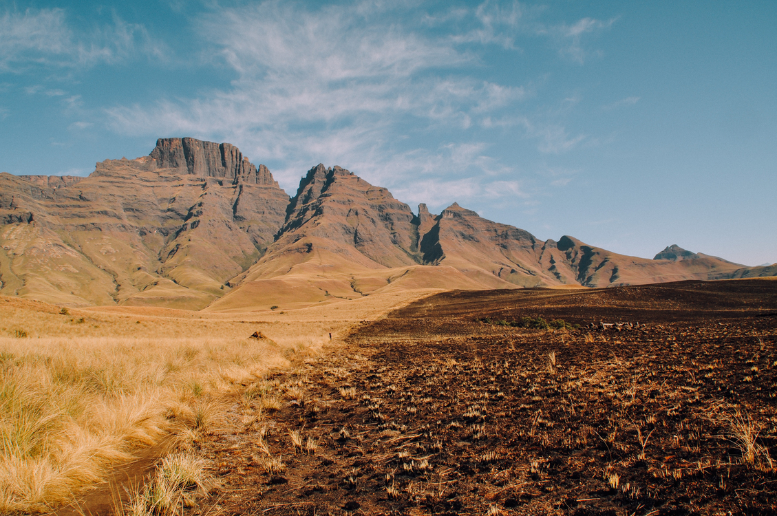 Wilderness,Soil,Shrubland