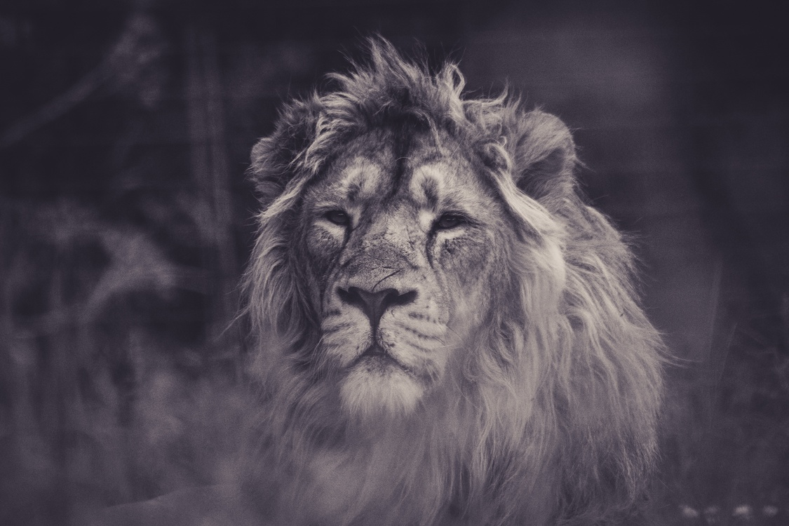 Wildlife,Fur,Big Cats