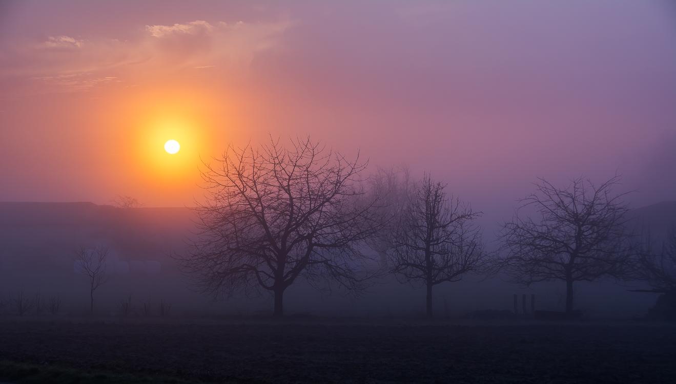 Atmosphere,Phenomenon,Red Sky At Morning