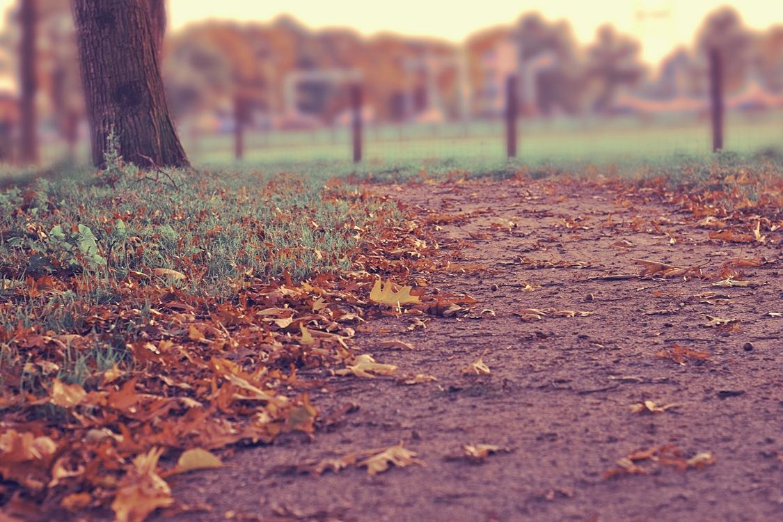 Autumn Season Song Summer Winter