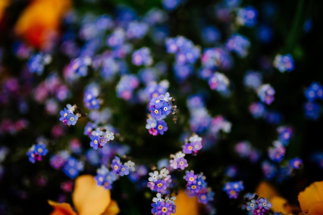 Blue,Plant,Flora