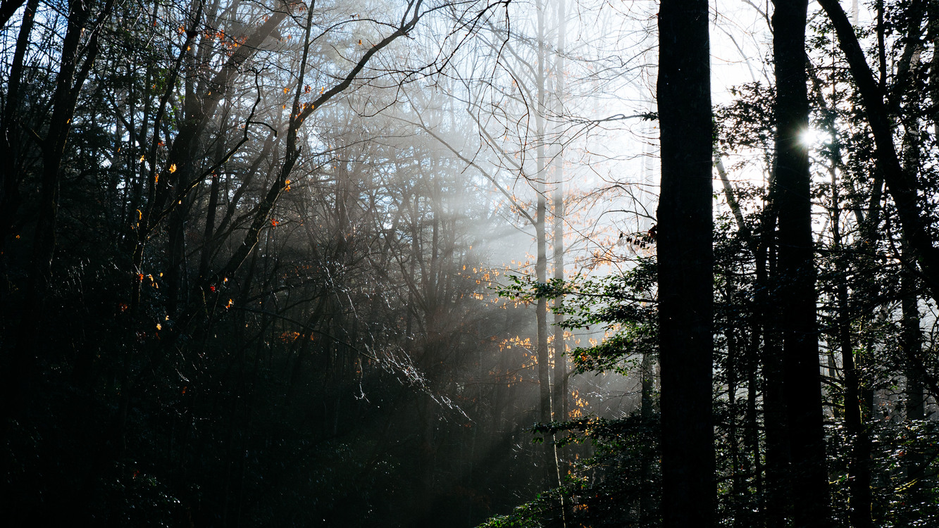 Atmosphere,Phenomenon,Temperate Broadleaf And Mixed Forest