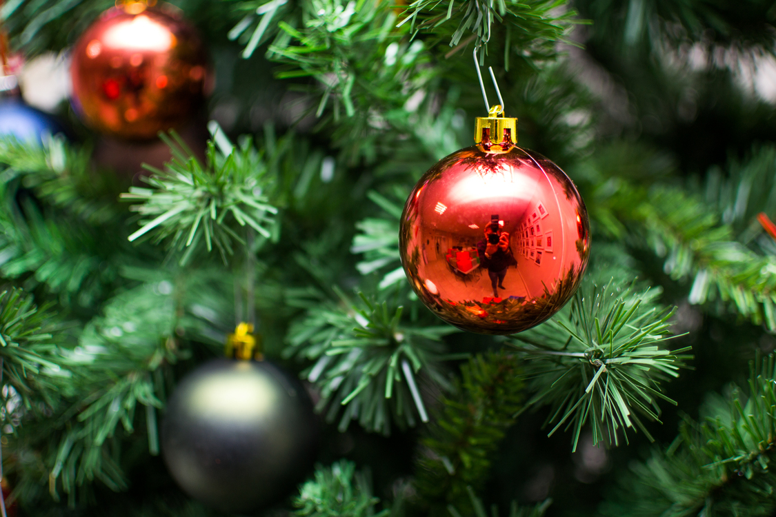 Evergreen,Fir,Christmas Decoration