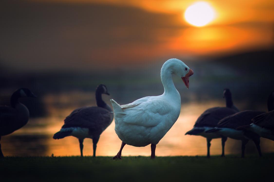 Evening,Water Bird,Sky