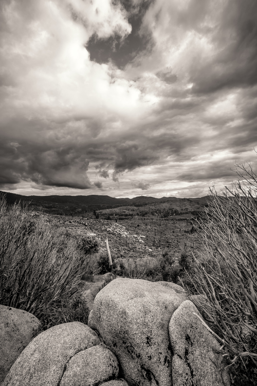 Black and white Nature photography Desktop Wallpaper