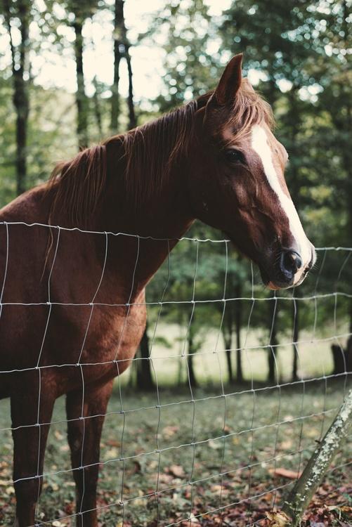 Livestock,Horse Tack,Colt