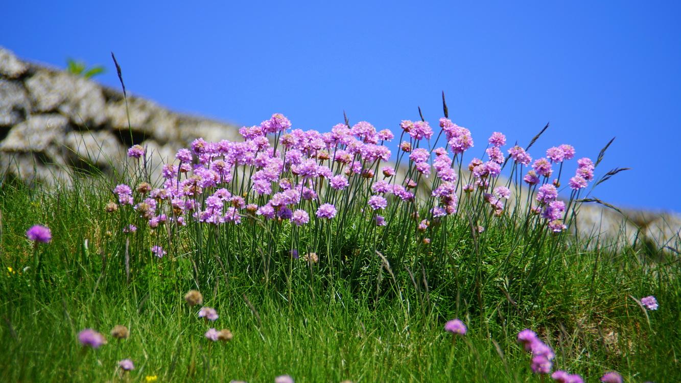Plant,Flora,Prairie