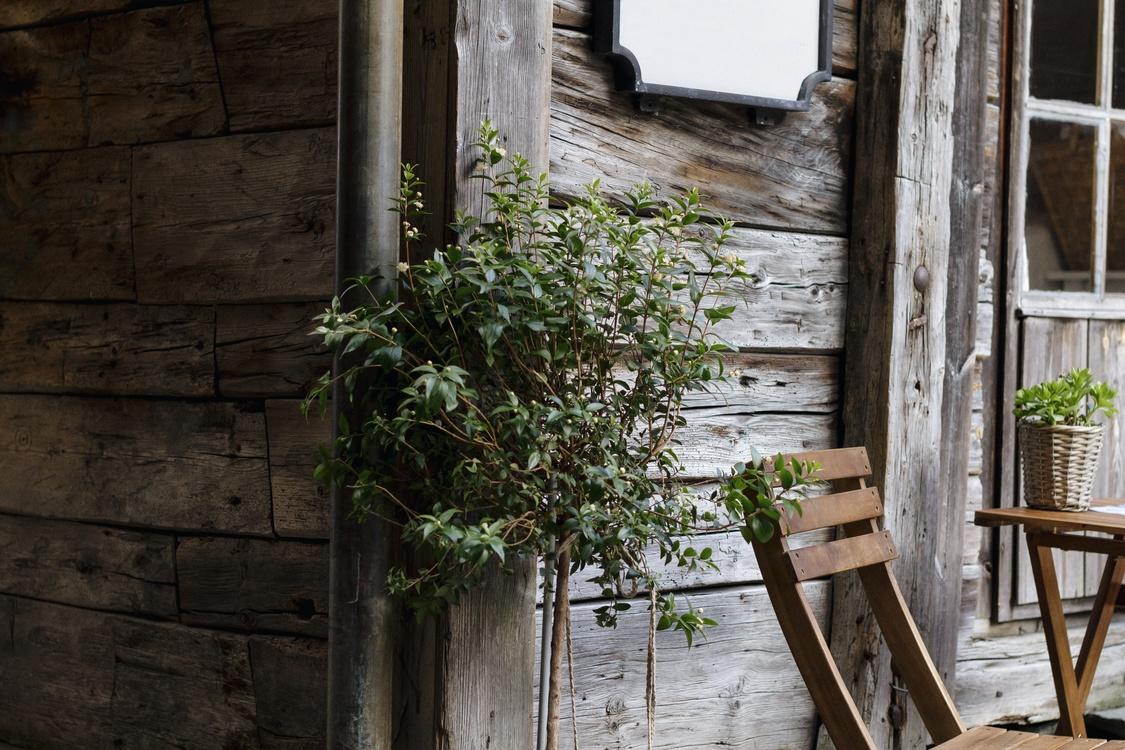Plant,Flower,Door