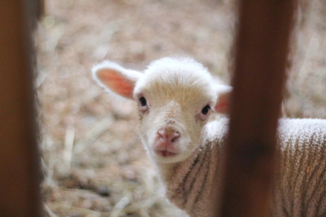 Hobson Family Farm Dysfunctional family Scapegoat Sheep