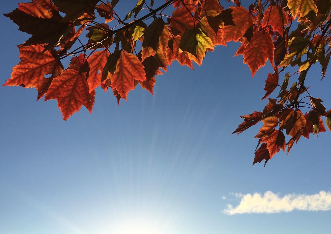 Leaf,Tree,Sky