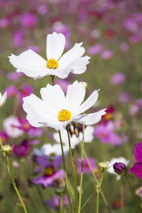 Plant,Flower,Meadow