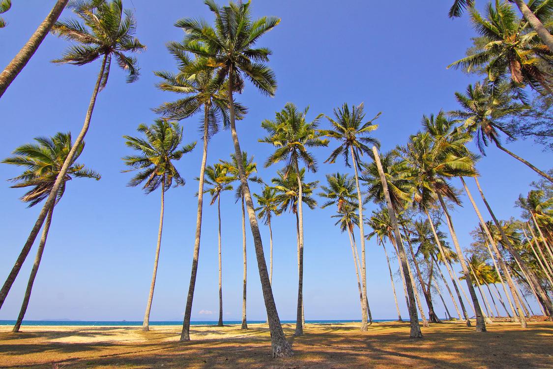 Water,Plant,Tropics