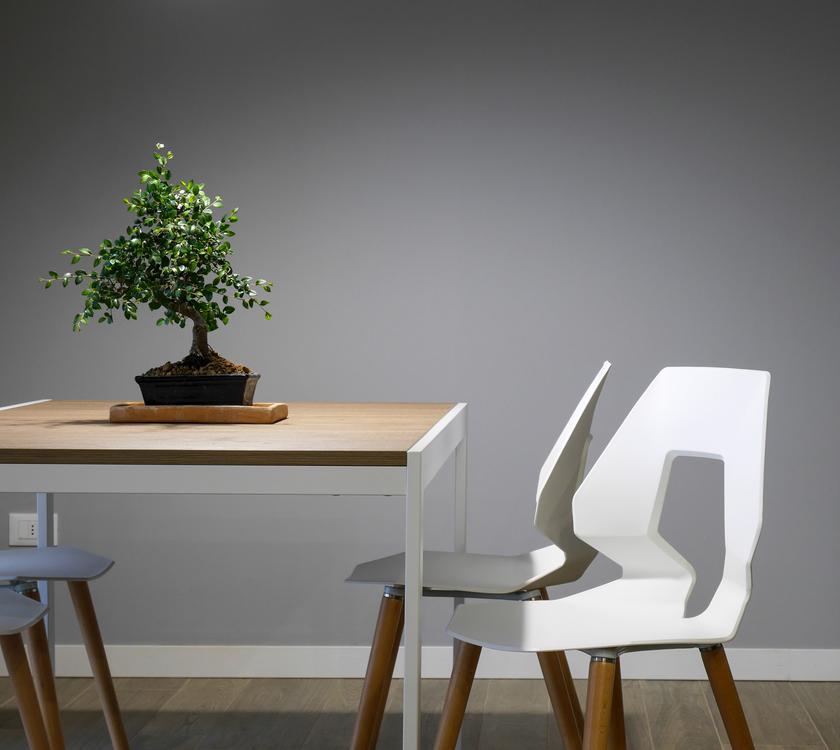 Houseplant,Flowerpot,Interior Design