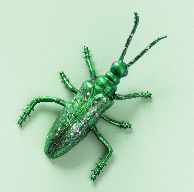 Macro Photography,Weevil,Invertebrate