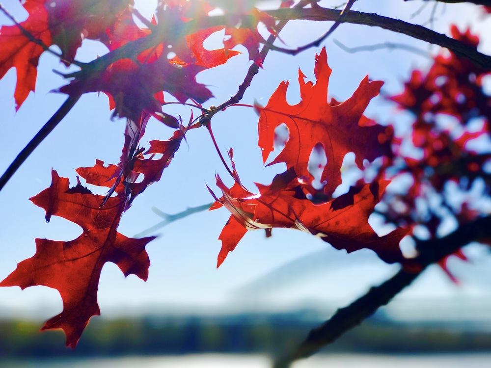 Plant,Leaf,Blossom