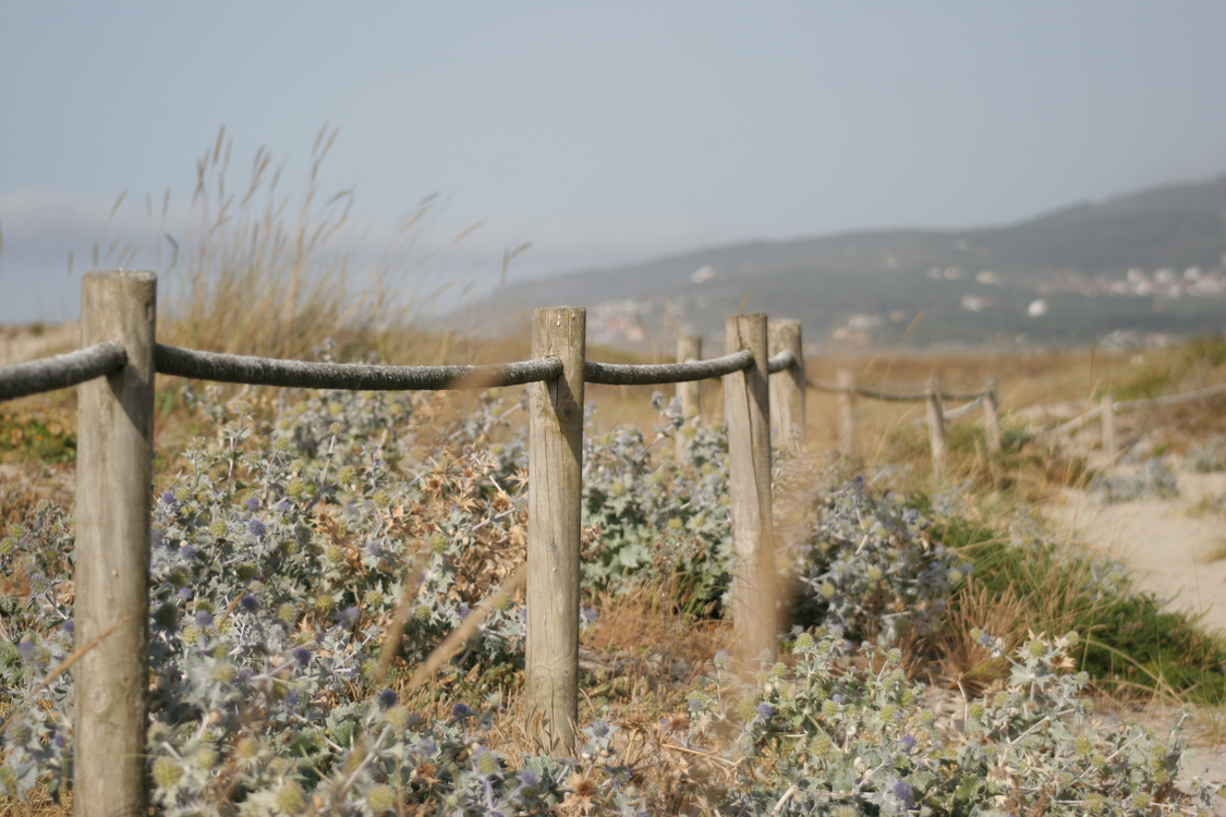 Fence,Tree,Sky