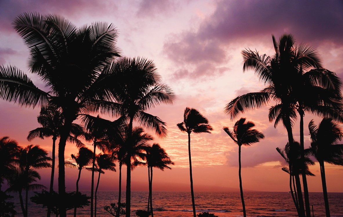 Plant,Evening,Caribbean