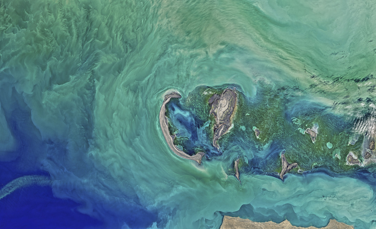 Marine Biology,Turquoise,Reef