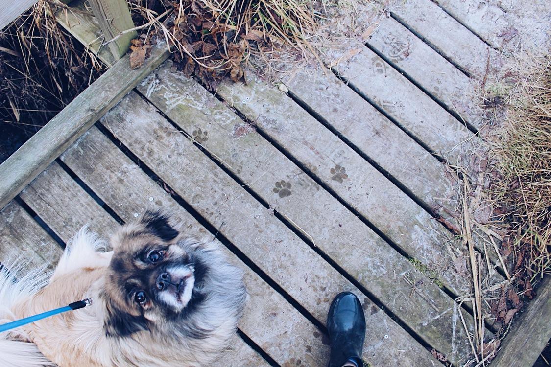Dog Like Mammal,Dog Breed Group,Grass