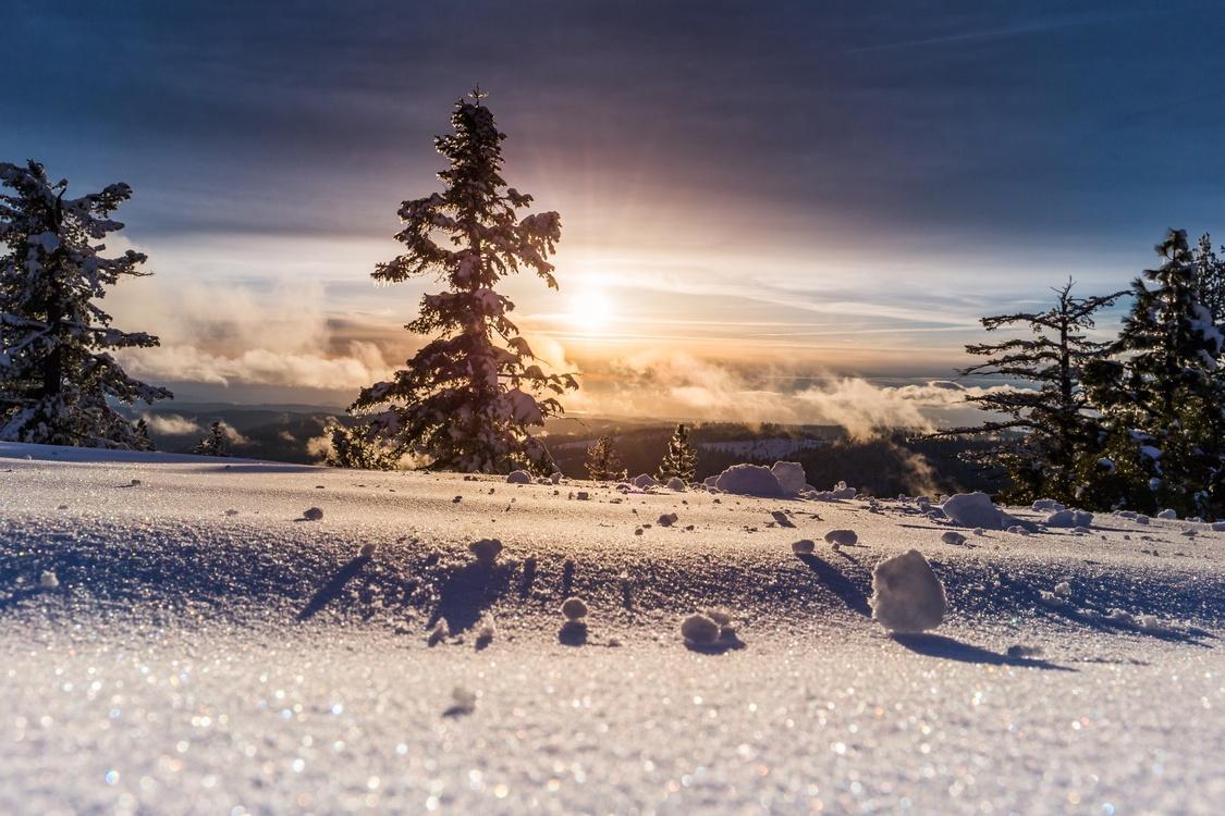Sunlight,Conifer,Spruce