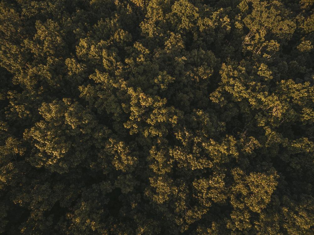 Biome,Sky,Tree