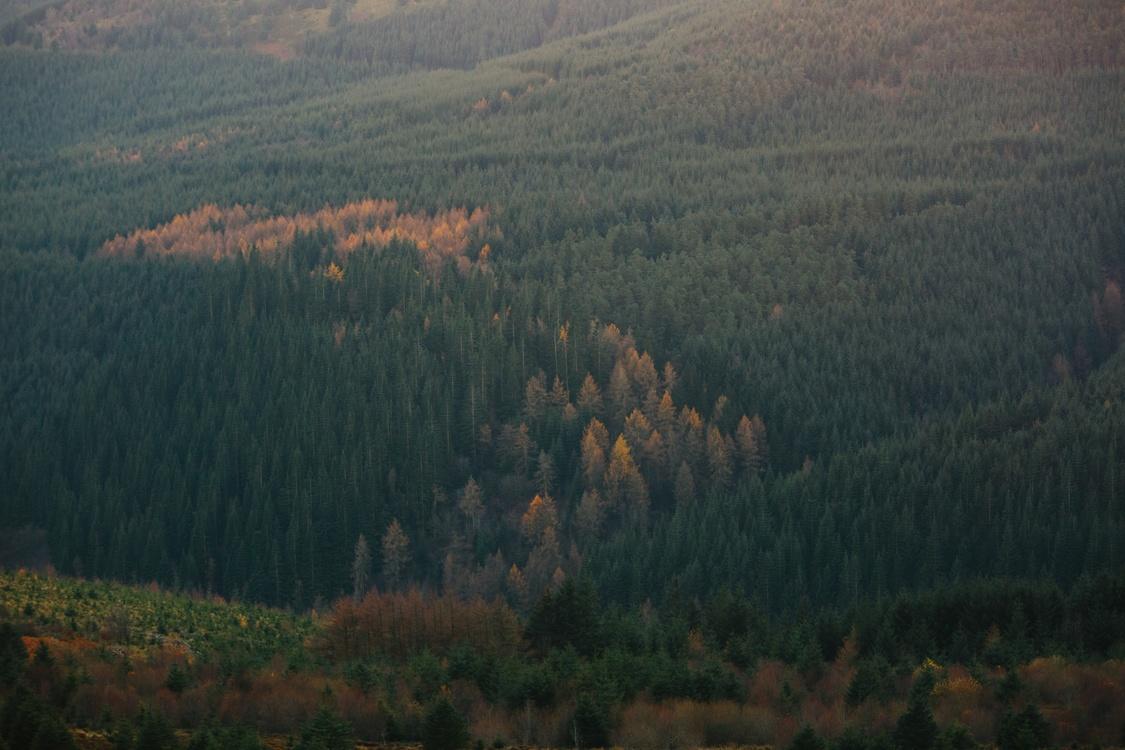 Atmosphere,Wilderness,Spruce Fir Forest