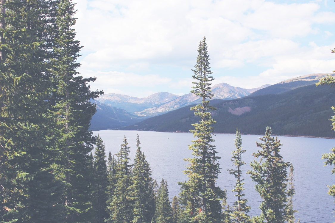 Wilderness,Spruce Fir Forest,Mount Scenery