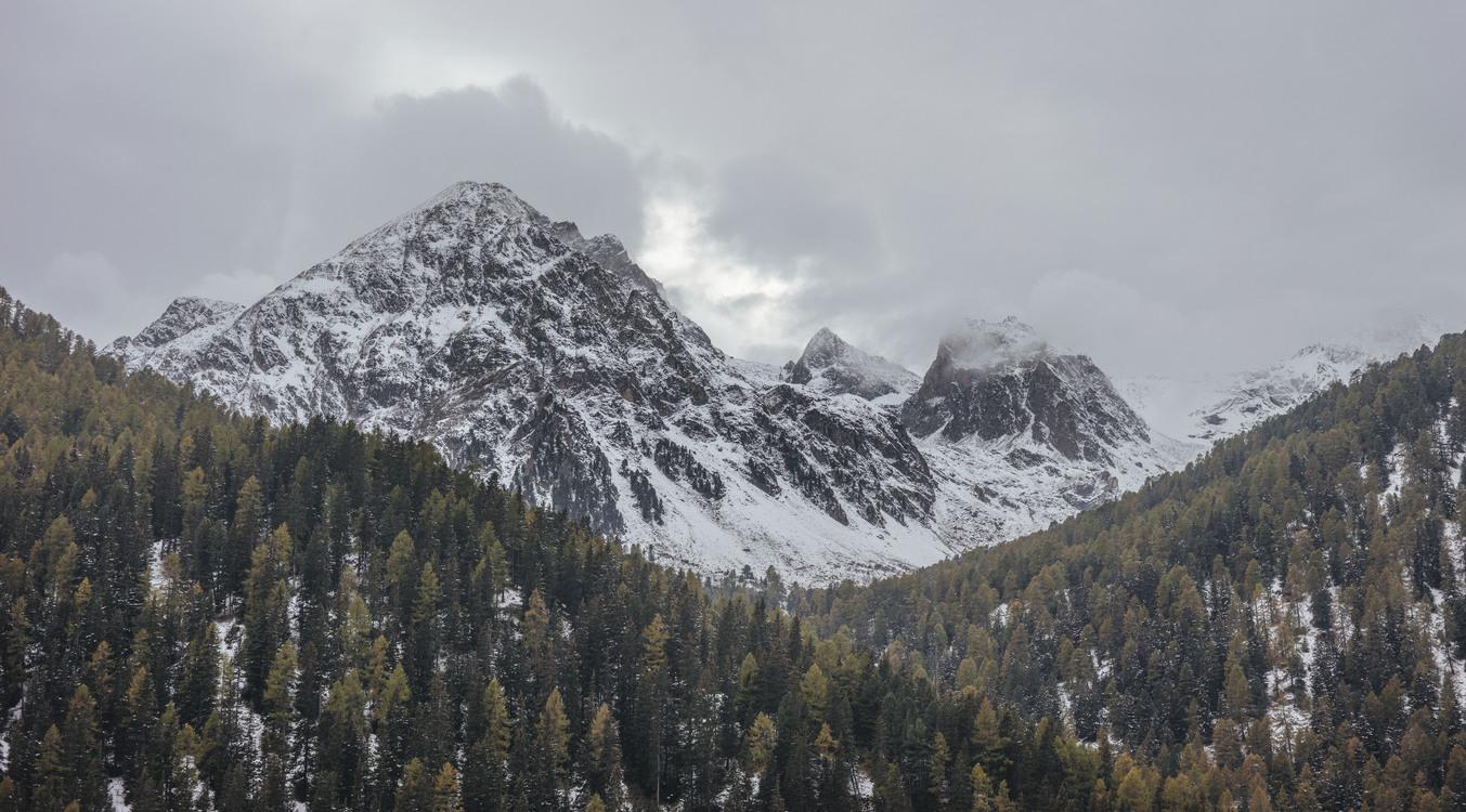 Wilderness,Massif,Spruce Fir Forest