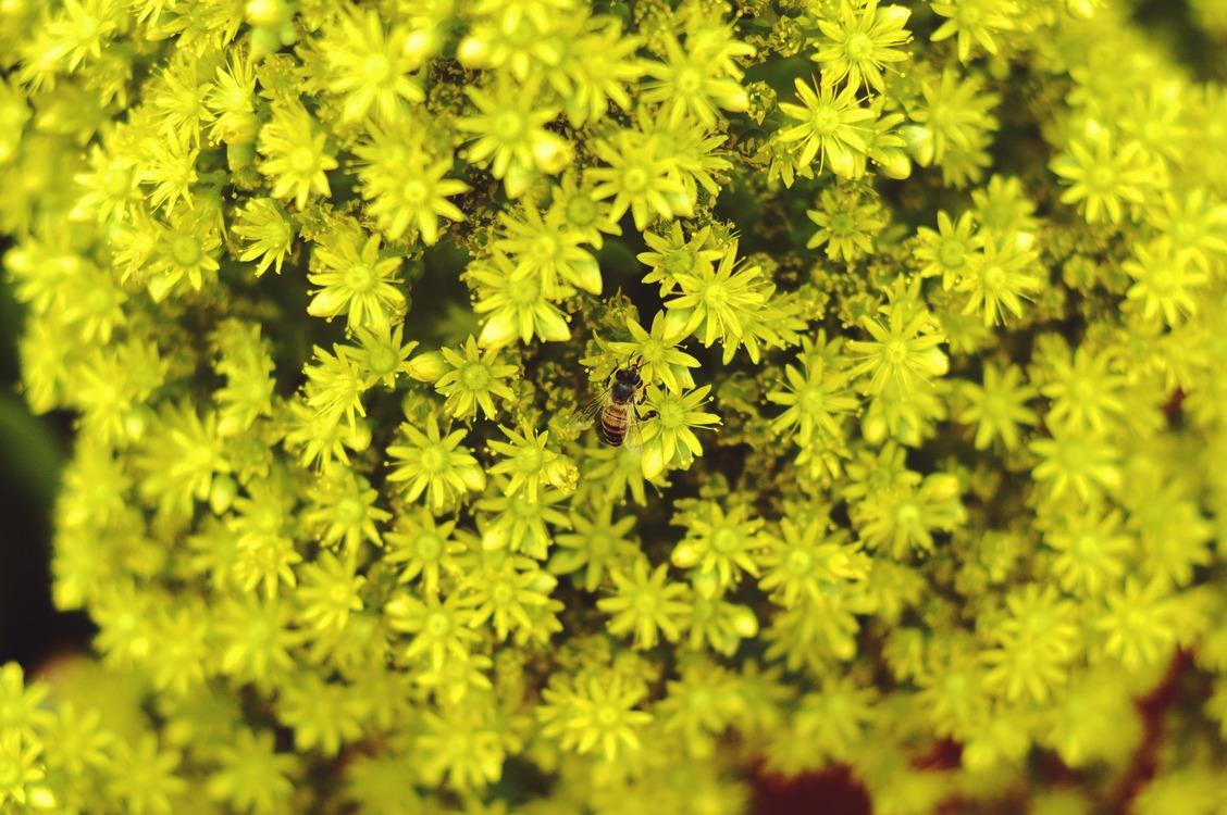 Plant,Flora,Non Vascular Land Plant