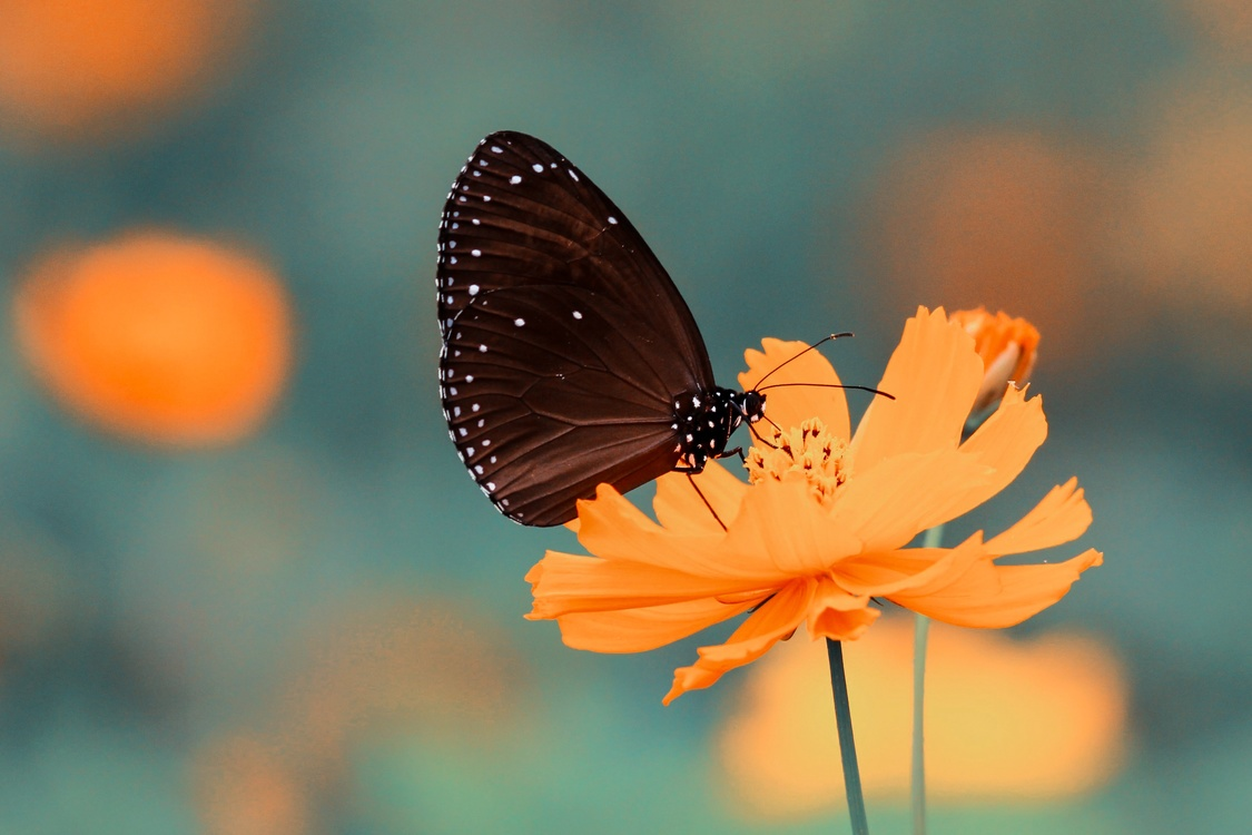 Butterfly,Pollen,Flower