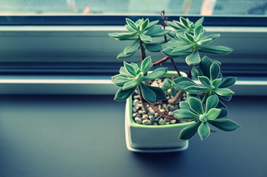 Flora,Houseplant,Plant